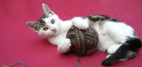 cat-with-yarn631