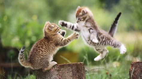 cats-hd-photo-wallpapers-5730_thumb (1)