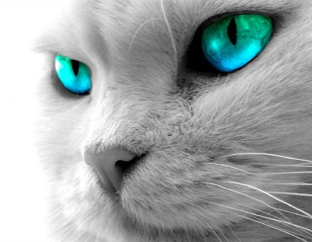 caturquoise