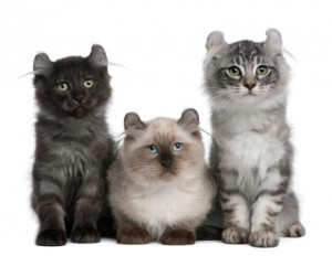 3-cats-300x232