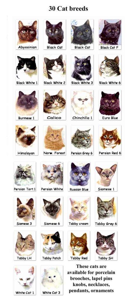 cat-breeds