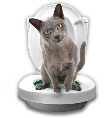 cat toilet training 3