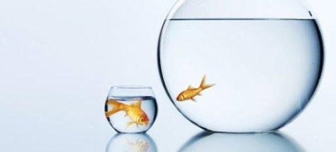 big-fish-small-pond