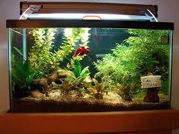 feng shui aquarium 2