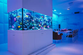 feng shui aquarium