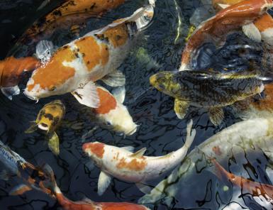 Tom-Haseltine-fish