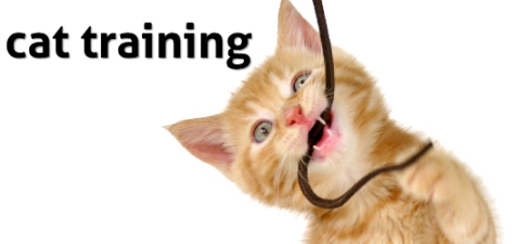 cat-training-10