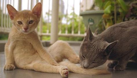 Tips-Cats-alltypesofcats.com-80