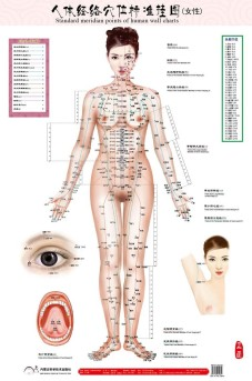 standard-meridian-font-b-points-b-font-of-human-wall-chart-female-font-b-acupuncture-b